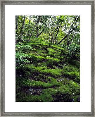Moss Forest In Kyoto Japan Framed Print by Daniel Hagerman