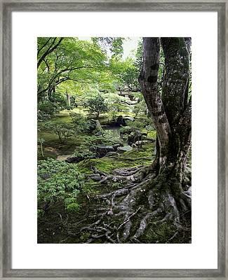 Moss Forest Japan Framed Print by Daniel Hagerman