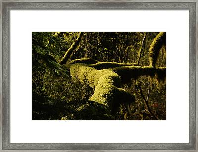 Moss In A Sliver Of Sun Framed Print by Jeff Swan