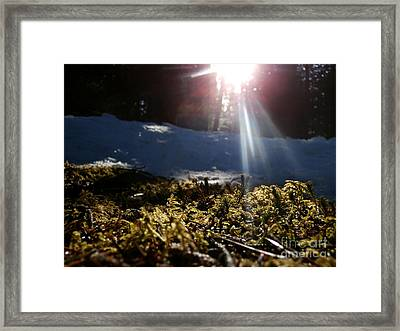 Moss In The Sunlight Framed Print by Steven Valkenberg
