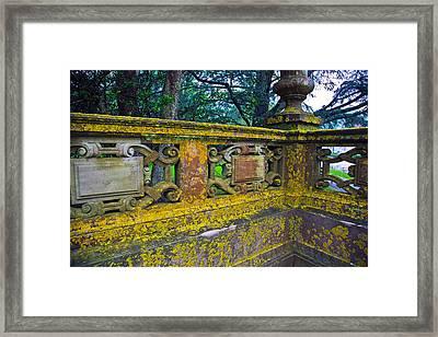 Moss Framed Print by John Hoey