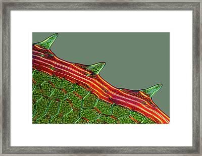 Moss Leaf Framed Print