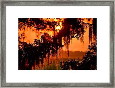 Moss Meets Sun  Framed Print by Mary Ward