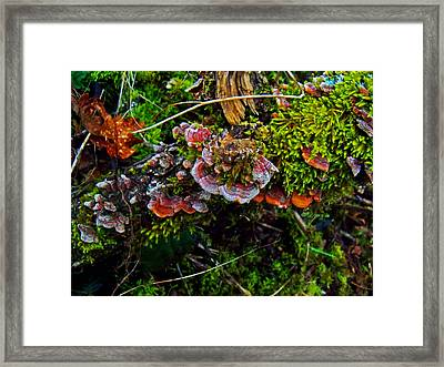 Moss Mushrooms And Knocks Framed Print