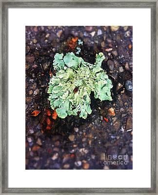 Moss On Cement Framed Print