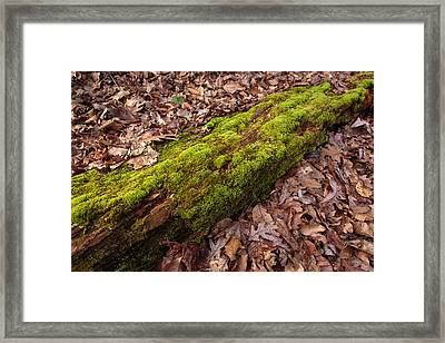 Moss On Pine Framed Print