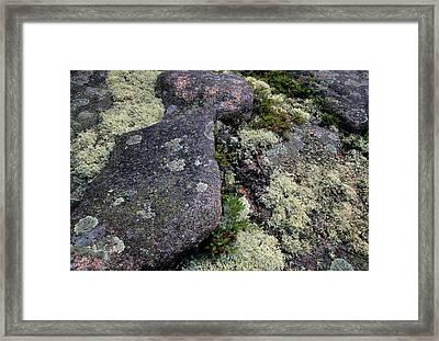 Moss On Rock-lubec-maine Framed Print