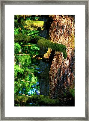 Moss On The Evergreens Framed Print by Jeanette C Landstrom