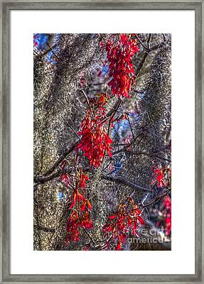Moss On The Red Tree Framed Print by Marvin Spates