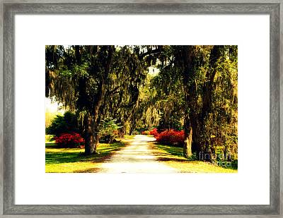 Moss On The Trees At Monks Corner In Charleston Framed Print by Susanne Van Hulst