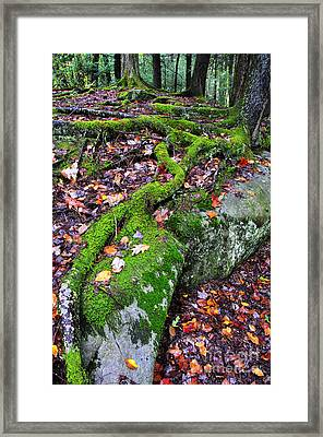 Moss Roots Rock And Fallen Leaves Framed Print