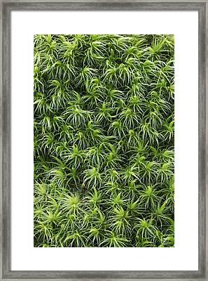 Moss Schleswig-holstein Germany Framed Print by Helge Schulz