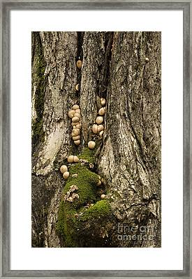 Framed Print featuring the photograph Moss-shrooms On A Tree by Carol Lynn Coronios