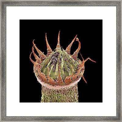 Moss Spore Capsule Framed Print by Natural History Museum, London