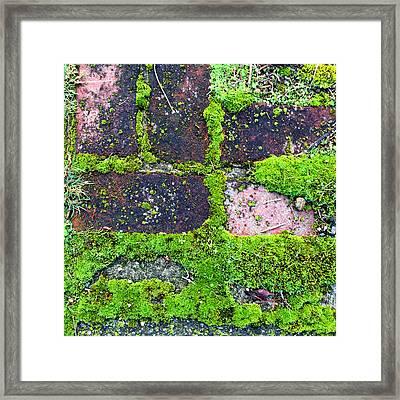 Moss Texture Abstract Framed Print