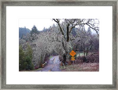 Mossicles Framed Print by Jordan Rusin