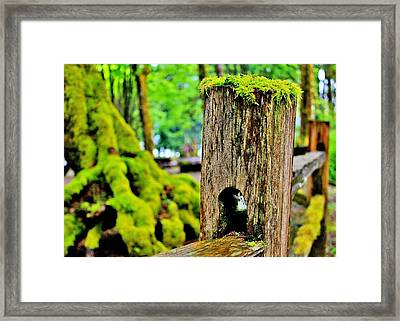 Mosspost Framed Print by Benjamin Yeager