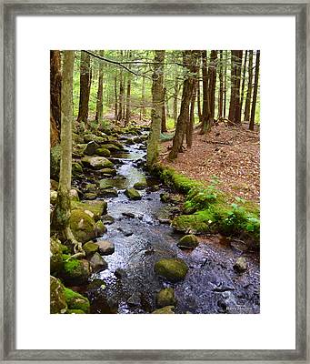 Mossy Brook Framed Print