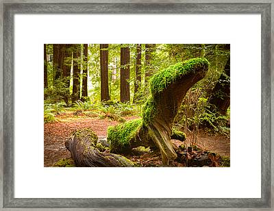 Mossy Creature Framed Print