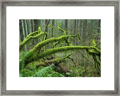 Mossy Dreamland Framed Print