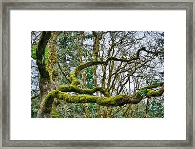 Mossy Green Framed Print by Kevin Munro