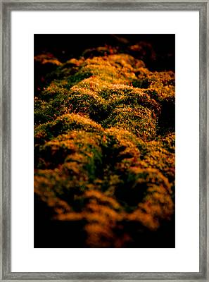 Mossy Hills Framed Print by Loriental Photography