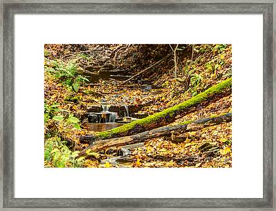Mossy Log And Stream Framed Print