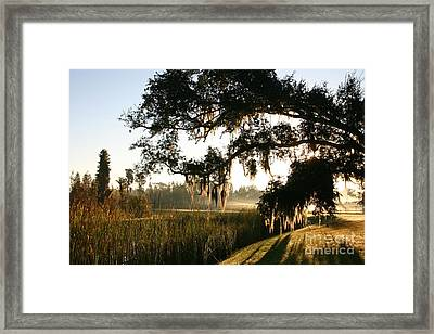 Framed Print featuring the photograph Mossy Oak Morning by Jeanne Forsythe