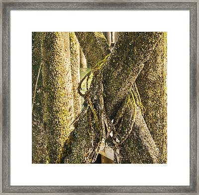 Mossy Pier Framed Print by Ernest Puglisi