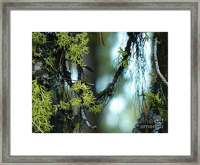 Mossy Playground Framed Print by Meghan at FireBonnet Art