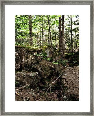Mossy Rocks In The Forest Framed Print