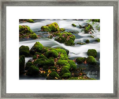 Mossy Spring Framed Print by Shannon Beck-Coatney