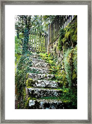 Mossy Stairs Framed Print
