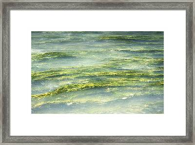 Mossy Tranquility Framed Print by Melanie Lankford Photography