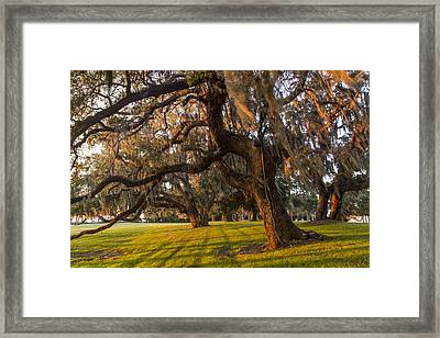 Mossy Trees At Sunset Framed Print by Debra and Dave Vanderlaan