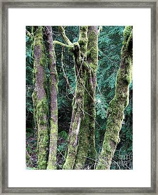 Mossy Trees Framed Print by Gerry Bates