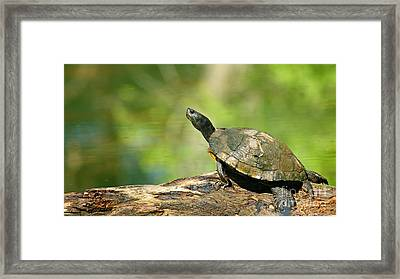 Mossy Turtle Framed Print