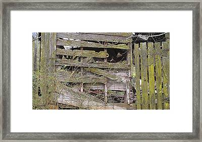 Framed Print featuring the photograph Mossy Wood by Lew Davis