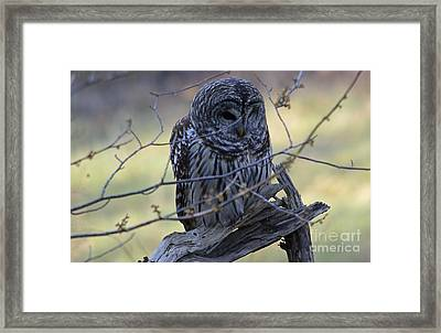 Framed Print featuring the photograph Mostly Awake by Randy Bodkins