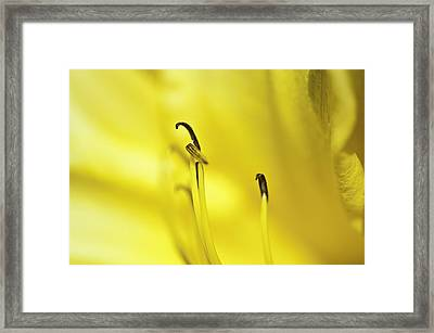 Mostly Yellow Framed Print