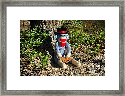 Monkey And Moth Framed Print by Al Powell Photography USA