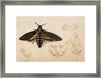 Moth, Chicken, Cats, C. 1535 Detail Framed Print