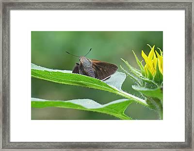 Moth Flower Framed Print