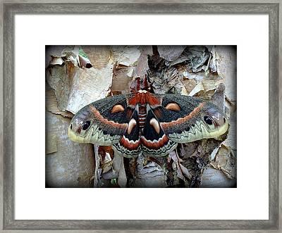Moth On Paper Birch Framed Print