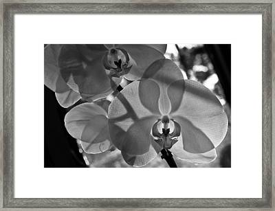 Framed Print featuring the photograph Moth Orchid Backlit by Ron White