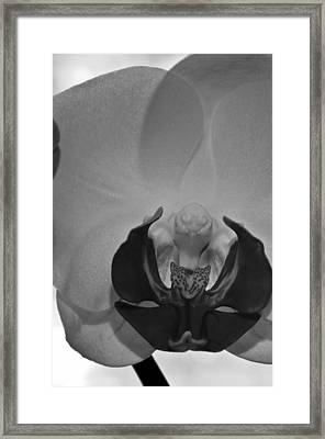 Framed Print featuring the photograph Moth Orchid Bw by Ron White