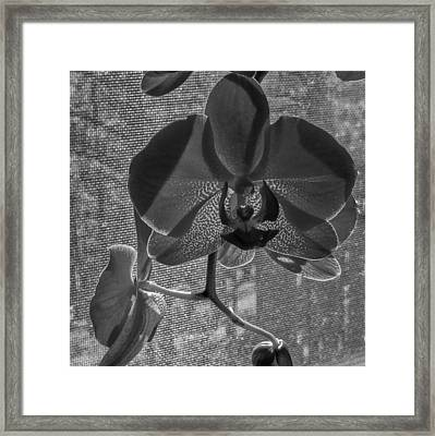 Framed Print featuring the photograph Moth Orchid In Window by Ron White