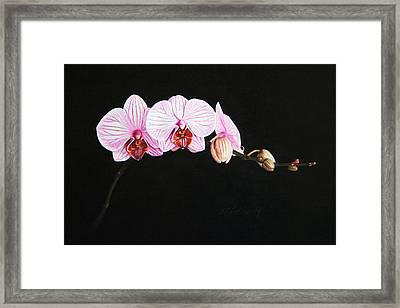 Moth Orchid Framed Print by Marna Edwards Flavell