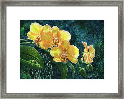 Moth Orchids Framed Print by Sandra LaFaut