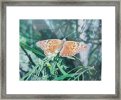 Moth Framed Print by Rosalie Klidies